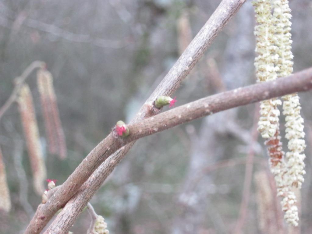 Les prémices du printemps