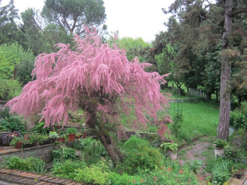 Jardin tamaris